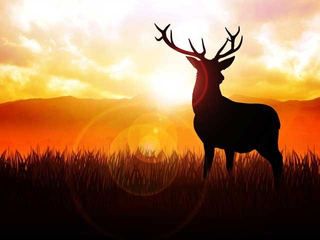 edelhert-in-zonsondergang-dier