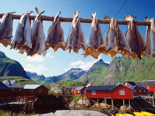 Noorwegen - Lofoten - stokvis