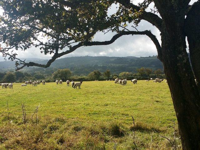 Groot - Brittanië - Dart Moor NP