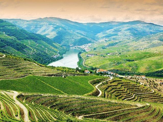 Portugal - Douro Vallei met wijngaarden