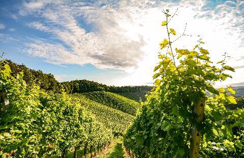 Duitsland, Cruise het wijngebied van de Moezel en Rijn - Oad busreizen