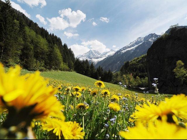 Oostenrijk - Zillertal