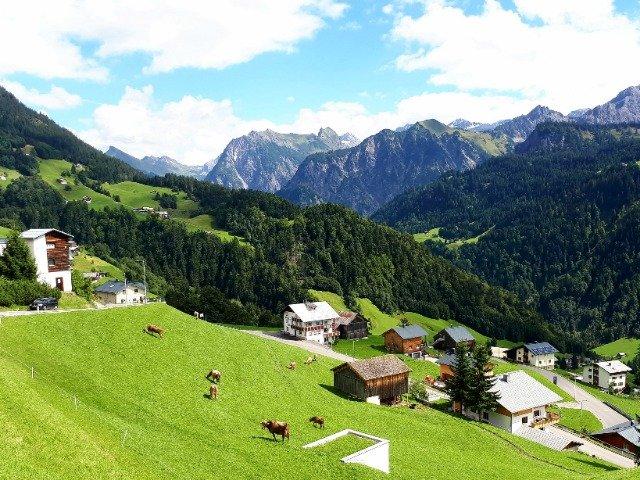 Oostenrijk - koeien op de alm