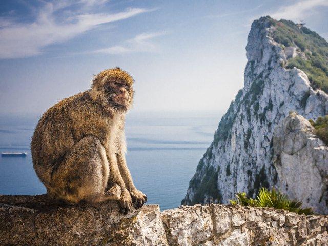 Spanje - Gibraltar - Apenrots