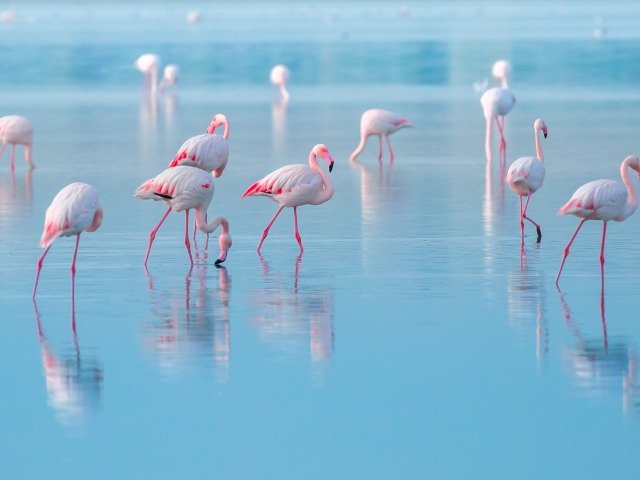 Flamingo's op Cyprus