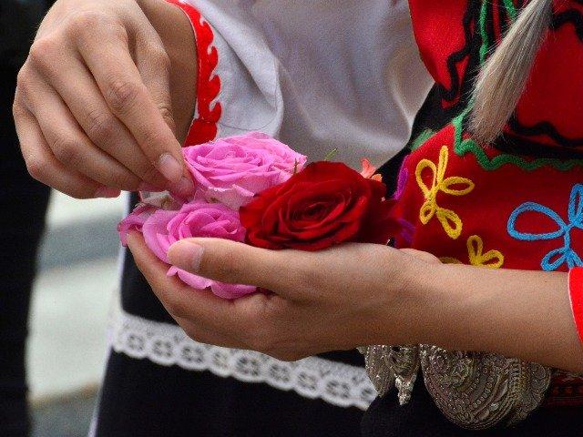 Bulgarije - Rozen voor Bulgaarse rozenolie