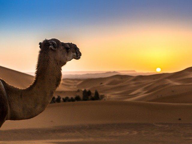 Marokko - Merzouga