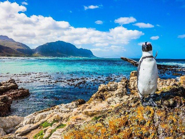 Zuid-Afrika - Pinguïns op Boulders Beach