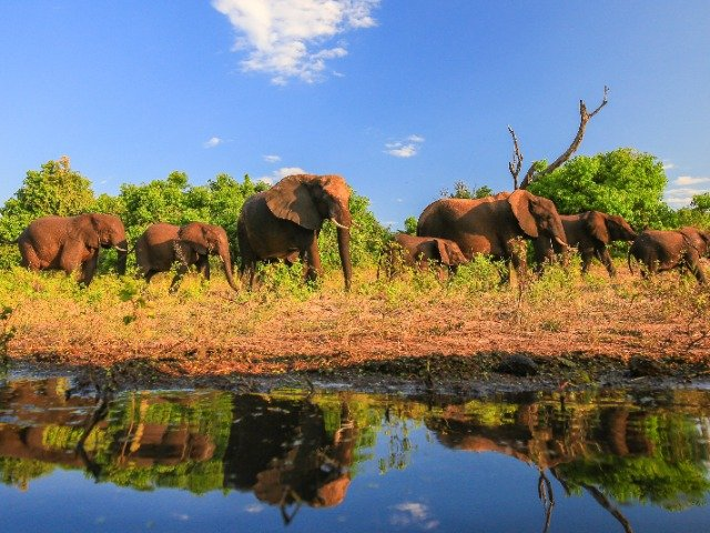Zuid-Afrika - Wildlife Olifanten