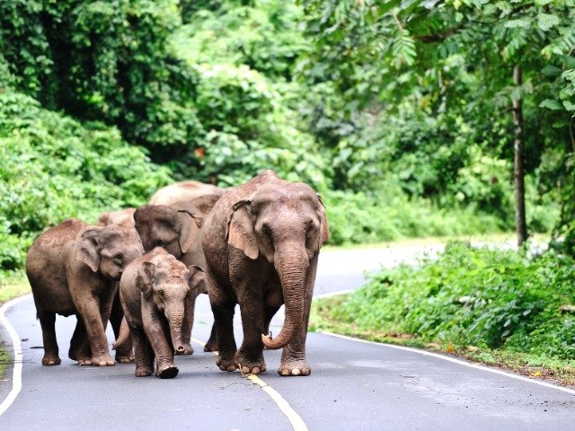 Thailand - Aziatische olifanten in Khao Yai Nationaal Park