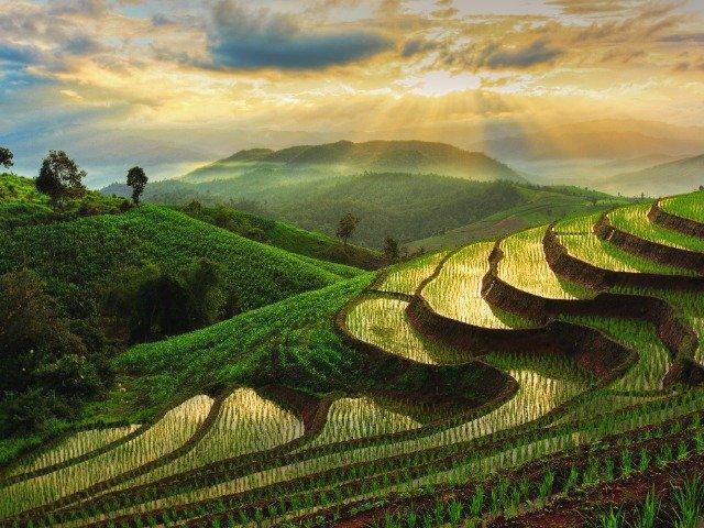 Thailand - Rijstveld in Chiang Mai