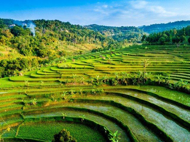 Java - Rijstterras bij Bandung