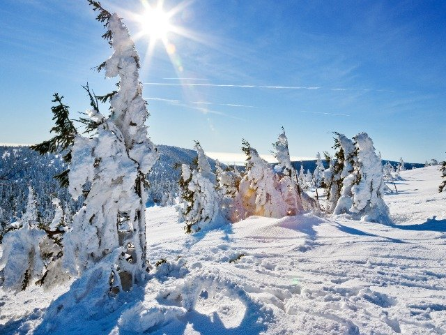 Tsjechië - Besneeuwde bomen langs de loipes