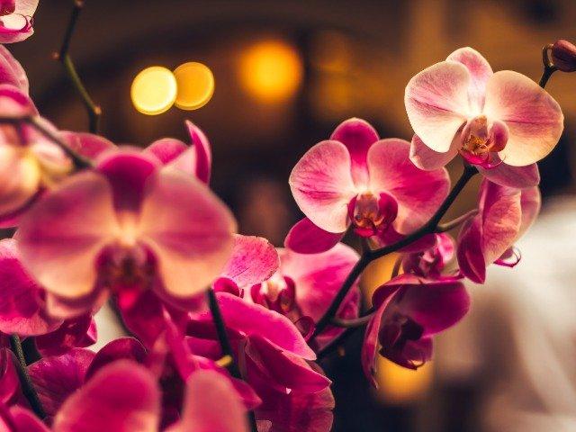 Nederland - Orchideeënhoeve Luttelgeest