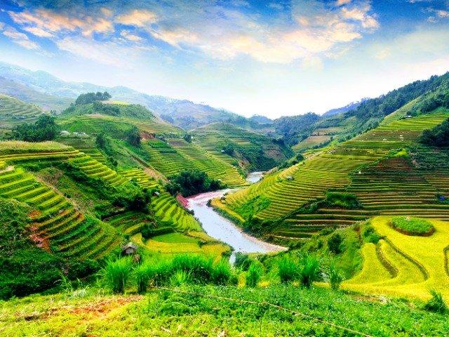 Vietnam - Rijstvelden