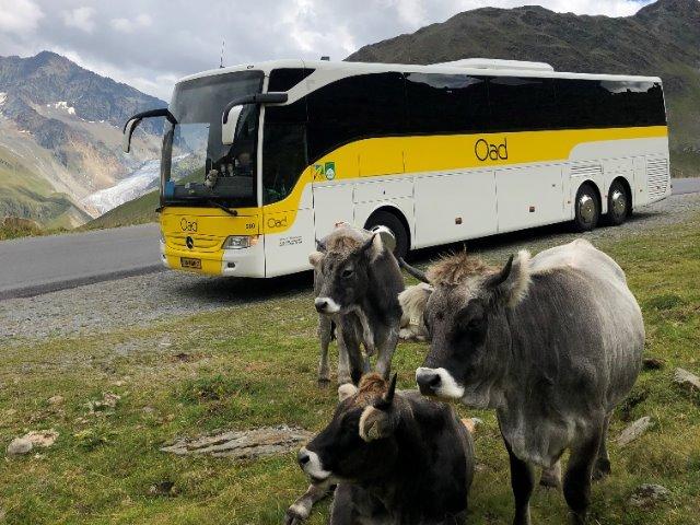 Oostenrijk - Oad bus - koeien onderweg