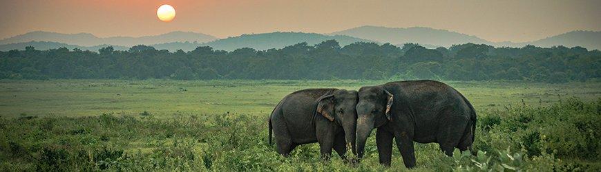 Sri Lanka GIT