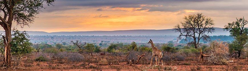 Zuid Afrika GIT