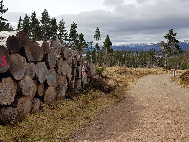 Schotland - Cairngorms NP
