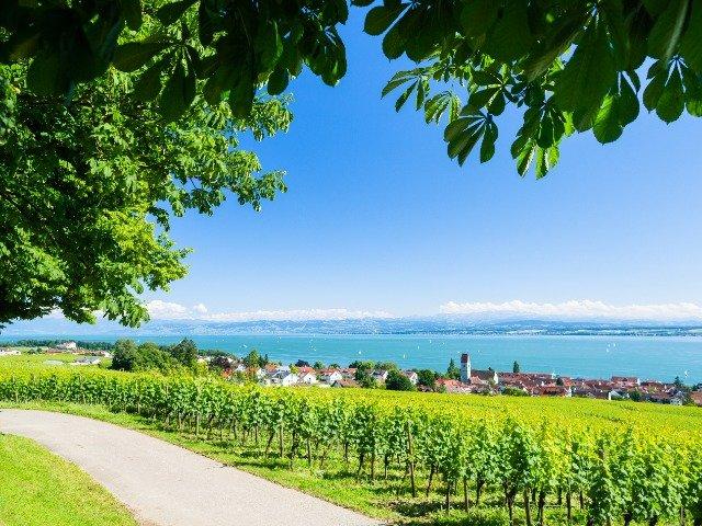 Duitsland - de Bodensee - wijngaard