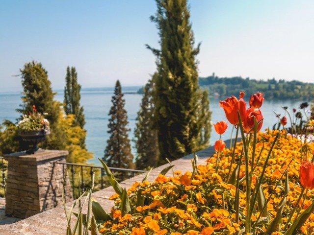 Duitsland - de Bodensee - bloemen