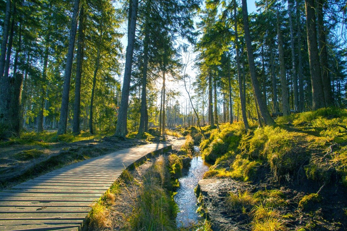Duitsland - Harz - bos
