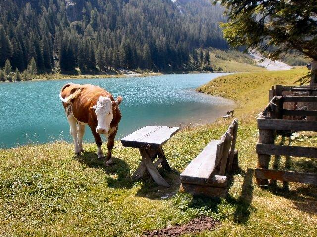 Oostenrijk - Salzburgerland - Schliereralm