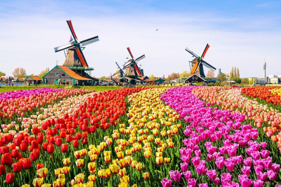 Oudhollandse steden & tulpenvelden - tulpenvelden