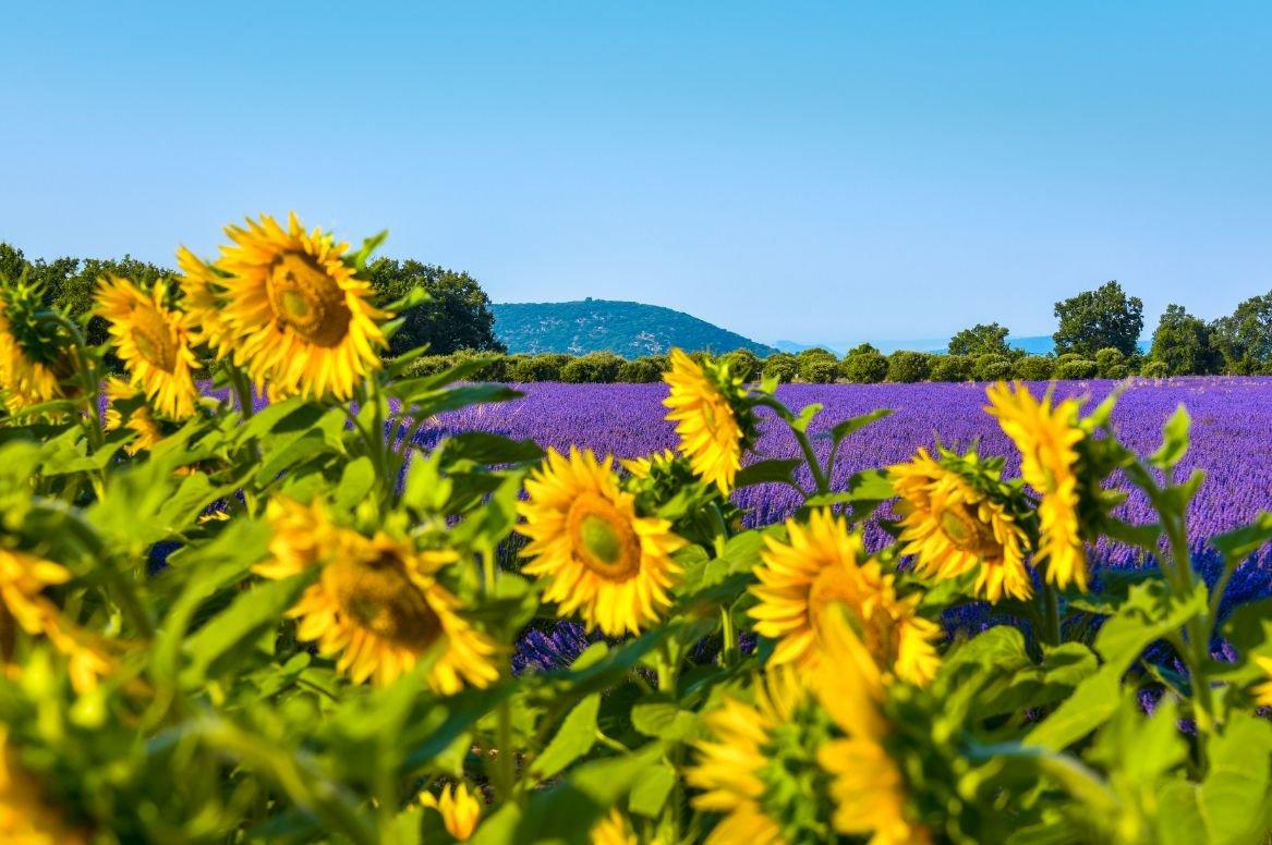 Provence landschap