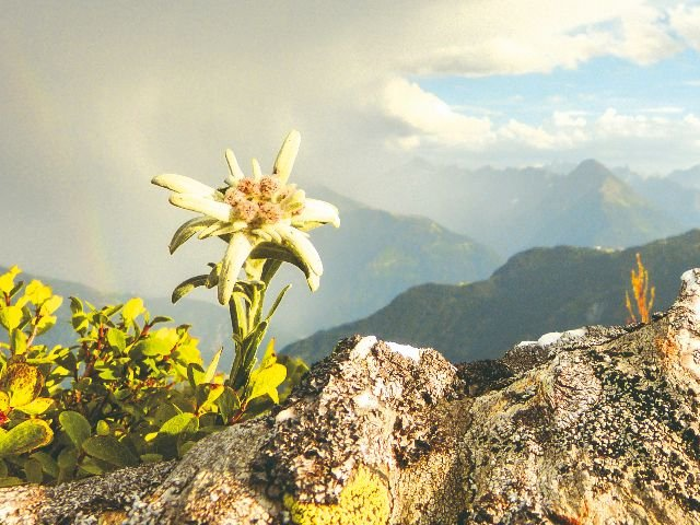 Oostenrijk - Gastvrij Tirol - Edelweiss