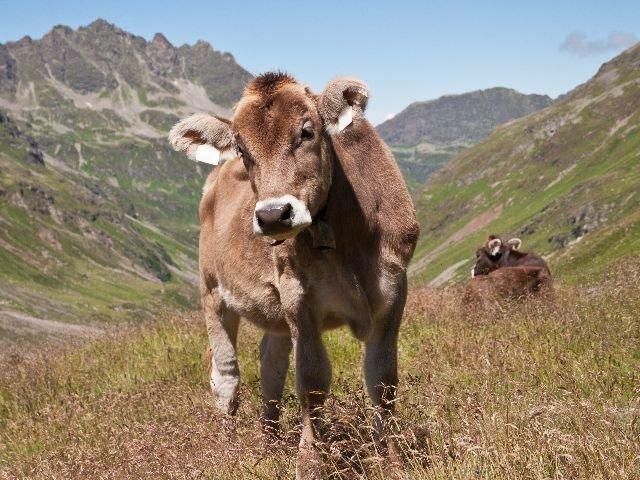 Oostenrijk - Alpenrijk Vorarlberg