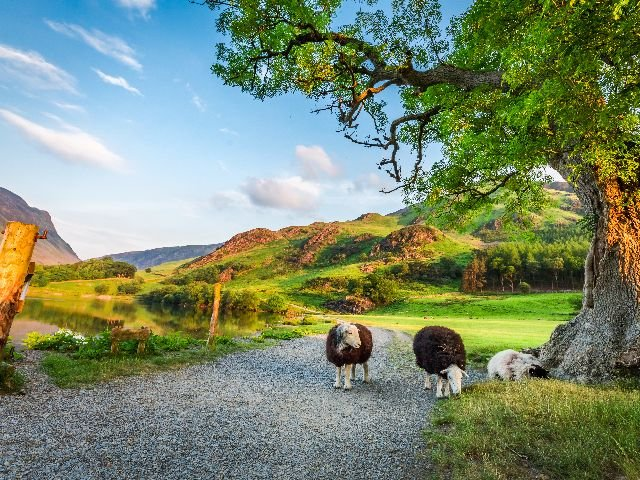 Groot Brittanië - Noord Engeland - Lake District - Schapen in een idylisch landschap
