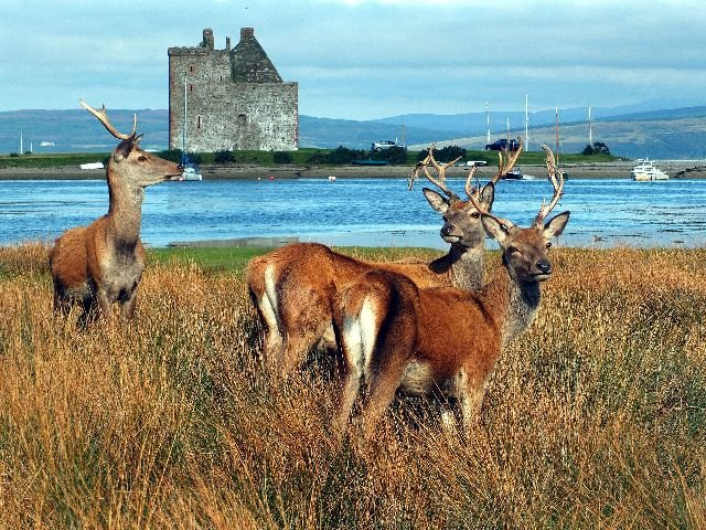 Groot - Brittannië - Schotland - Isle of Arran - Lochranza Castle