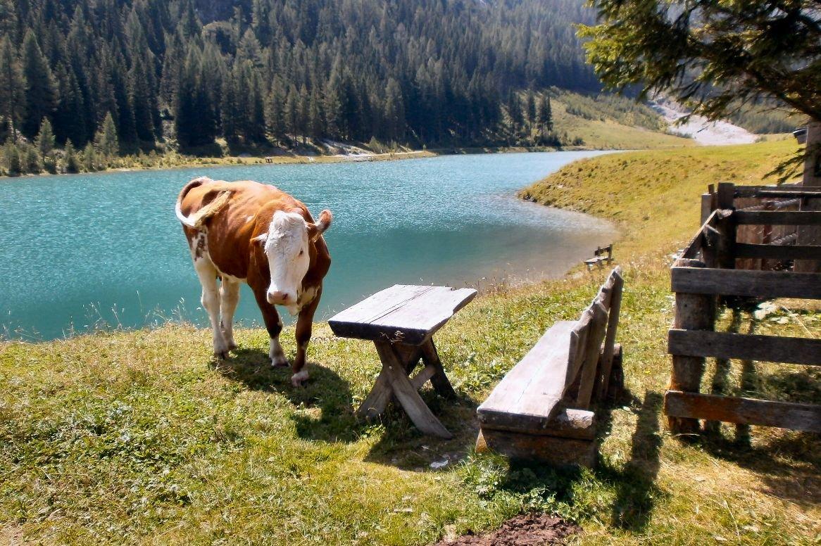 Oostenrijk - wandelen Salzburgerland