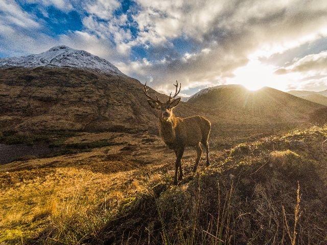 Groot Brittannië - Schotland - Schotse Hooglanden