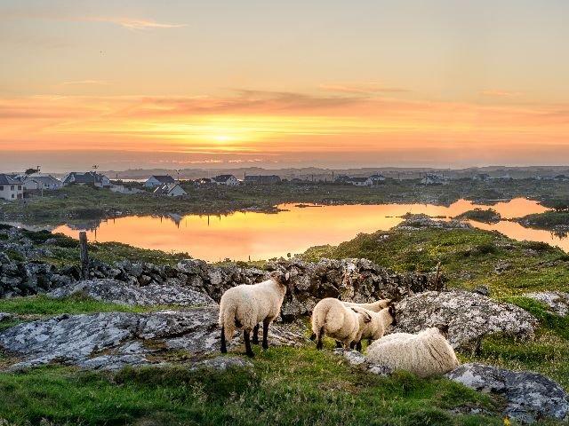 Ierland - Connemara