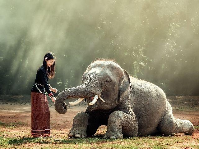 Thailand - olifant