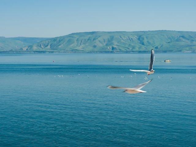 Israël - meer van Tiberias - vogels