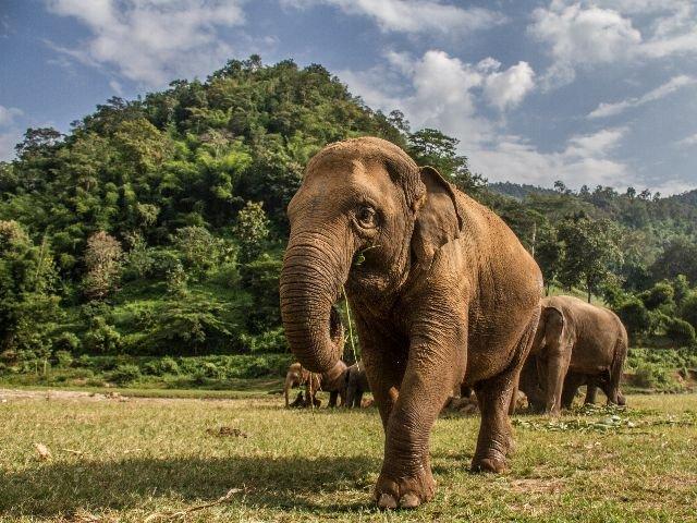 Thailand - Khao Yai N.P. - olifanten