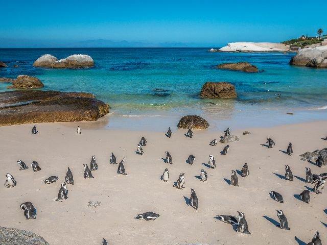 Zuid-Afrika - Kaapstad - Boulders Beach