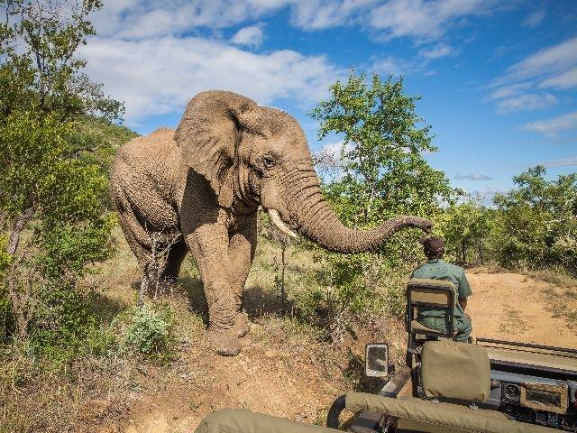 Zuid-Afrika - safari