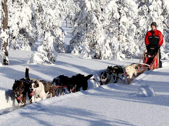 Noorwegen - Norefjell - Hondensledetocht