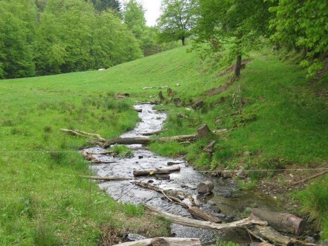 Waldbreitbach - natuur - water