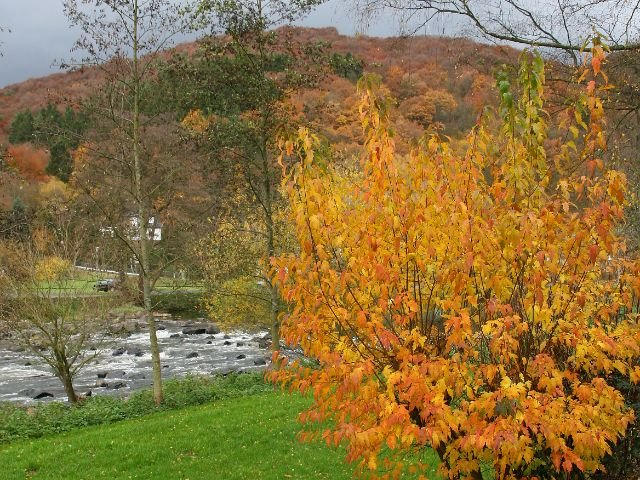 Waldbreitbach - water