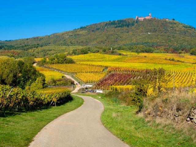 Frankrijk Elzas pad naar Koenigsbourg