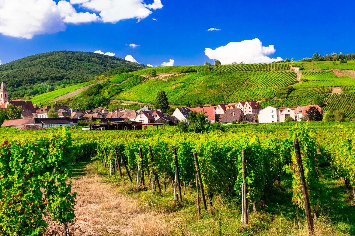 Frankrijk Elzas wijngaarden