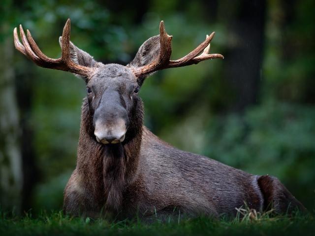 Zweden - eland