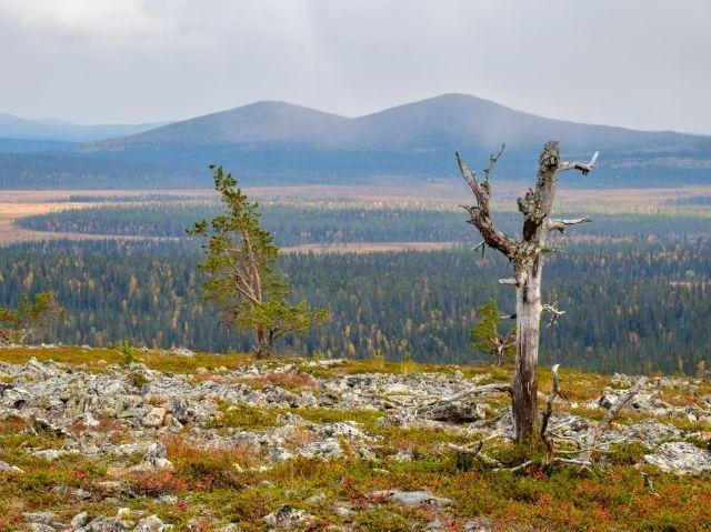 Finland - omgeving Tankavaara