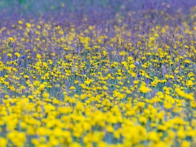 bloemenzee Drenthe