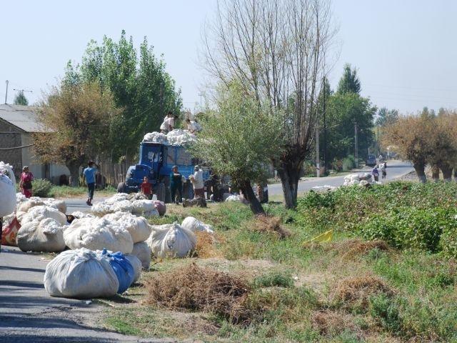 Uzbekistan - katoenvelden